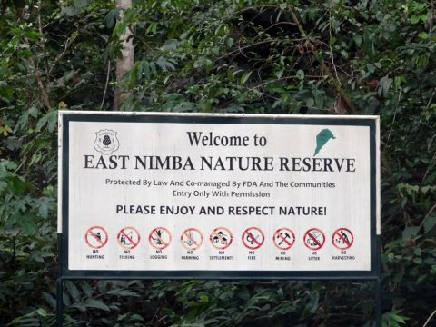East Nimba Nature Reserve Liberia