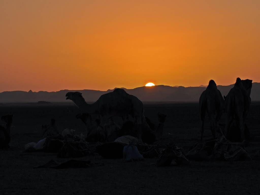 Nomadic caravans in the Sahara desert