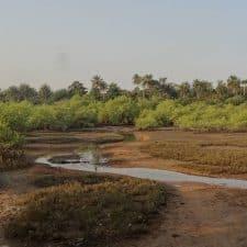 Manglar Cantanhez Guinea Bissau