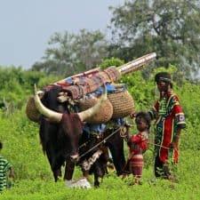 Wodaabe nomads Chad