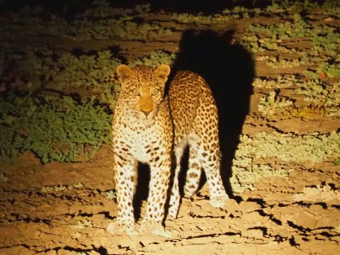 Night safari in Zakouma