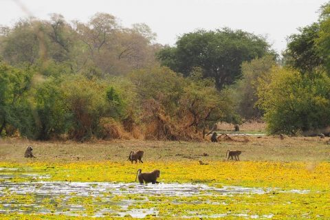 Tours to Zakouma National Park