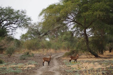 Zakouma National Park