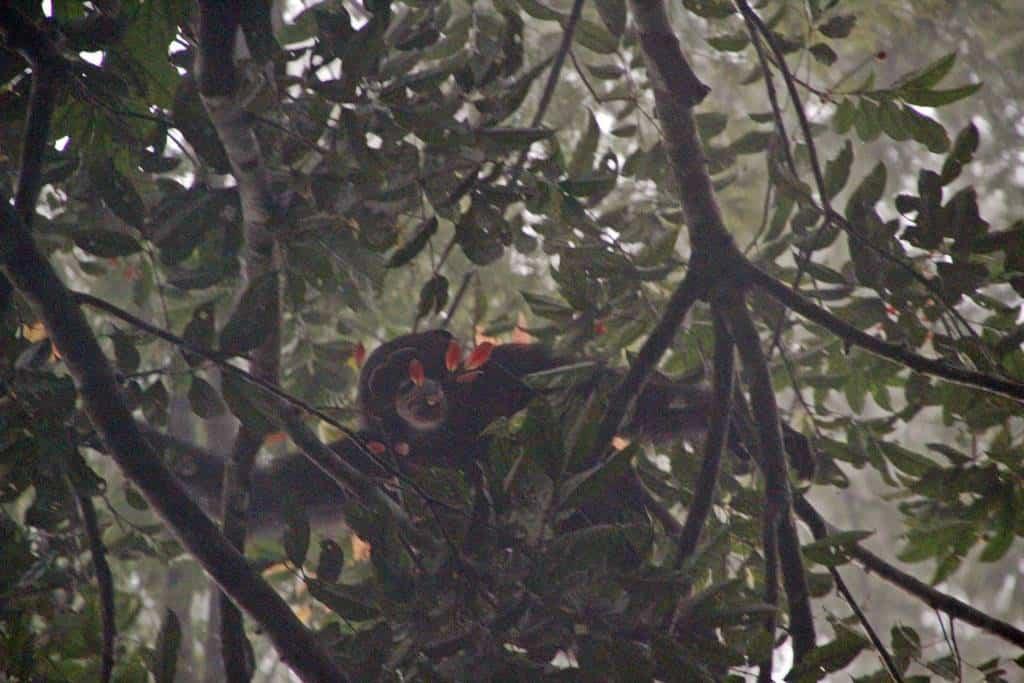 Chimps Tai National Park