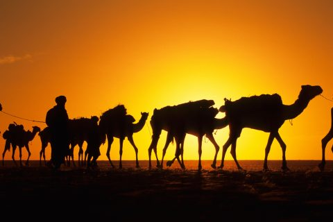 Expedition overland in Central Africa