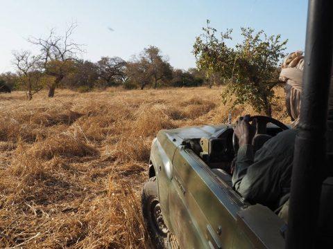 Parc National Zakouma Chad
