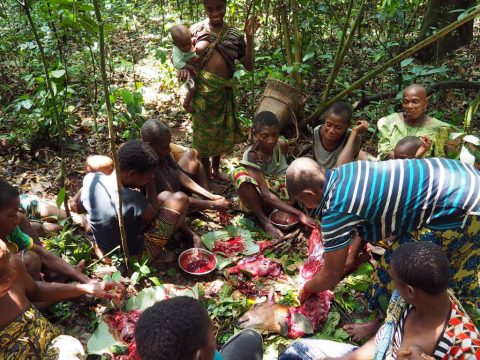 Pygmy communities Africa