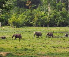 Viajes a Gabon