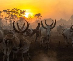 Trips to South Sudan